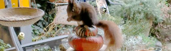 Eichhörnchen besucht seinen Weihnachtsmarkt